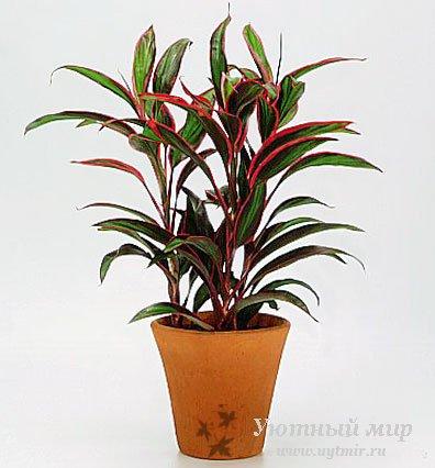 Растений комнатные растения
