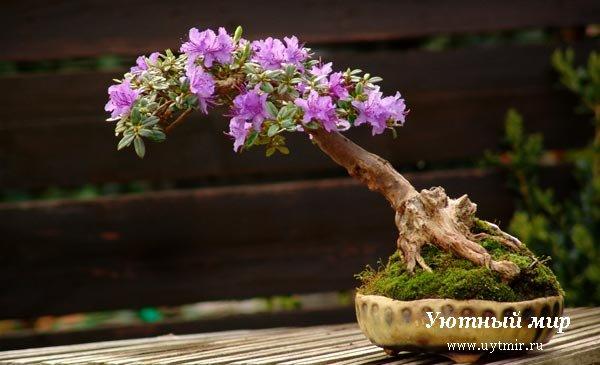 Комнатных растений комнатные цветы