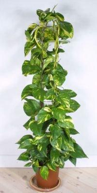 Растения в интерьере удобрения для