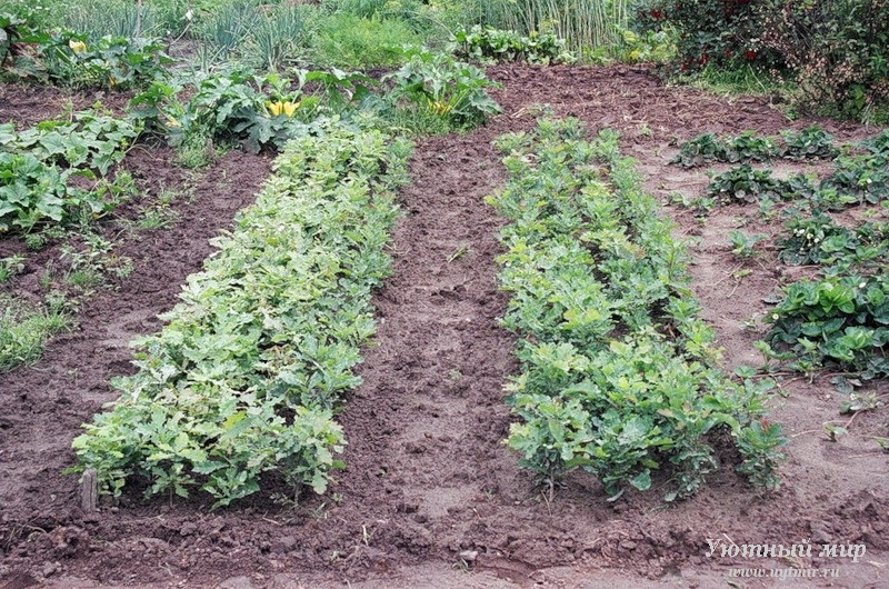 Сад огород без хлопот как вырастить