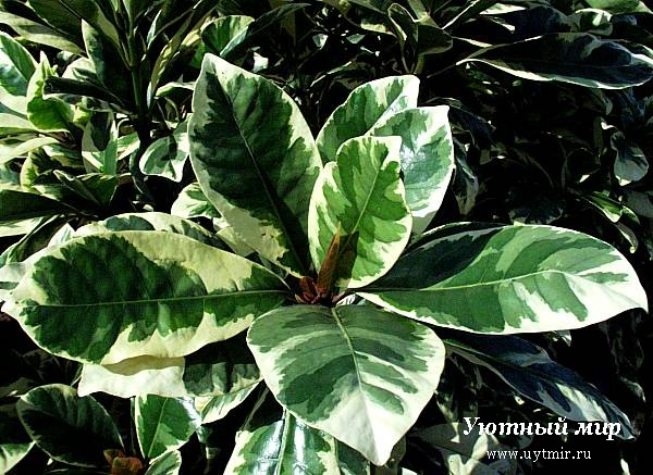 Растения комнатные растения