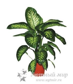 Растения комнатные растения фото