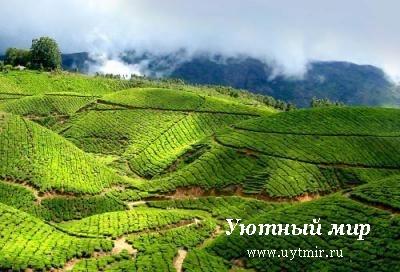 Керала, Индия,Тируванантапурам, достопримечательности, фото, картинки, отдых, путешествие, посмотреть, посетить, путеводитель, бесплатно, описание,